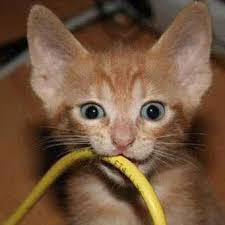 поврежден интернет кабель провайдера